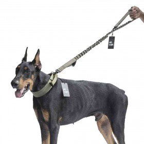 Dog Leash 01