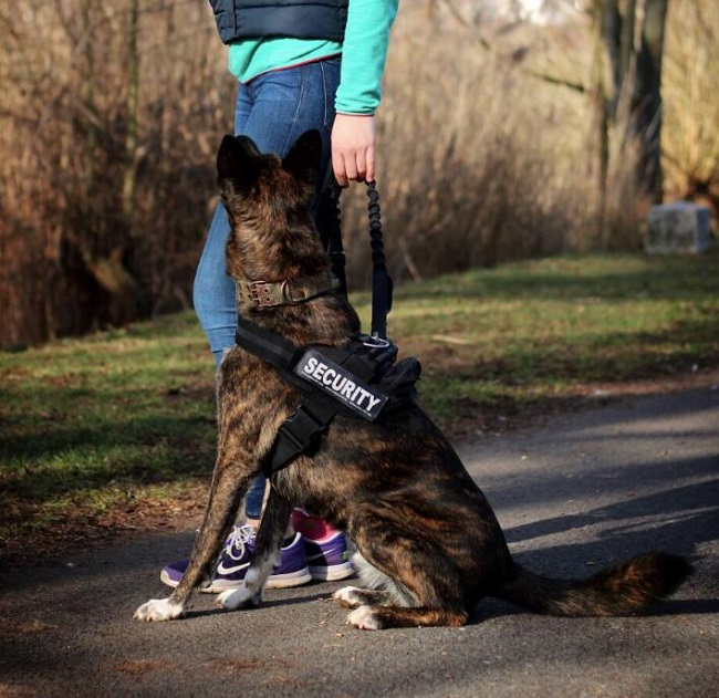 AT-HOME WORKOUT GEAR FOR MAN & DOG