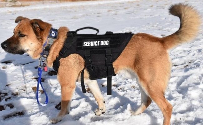 """""""X DESTROYER"""" K9 HARNESS USER REVIEW"""