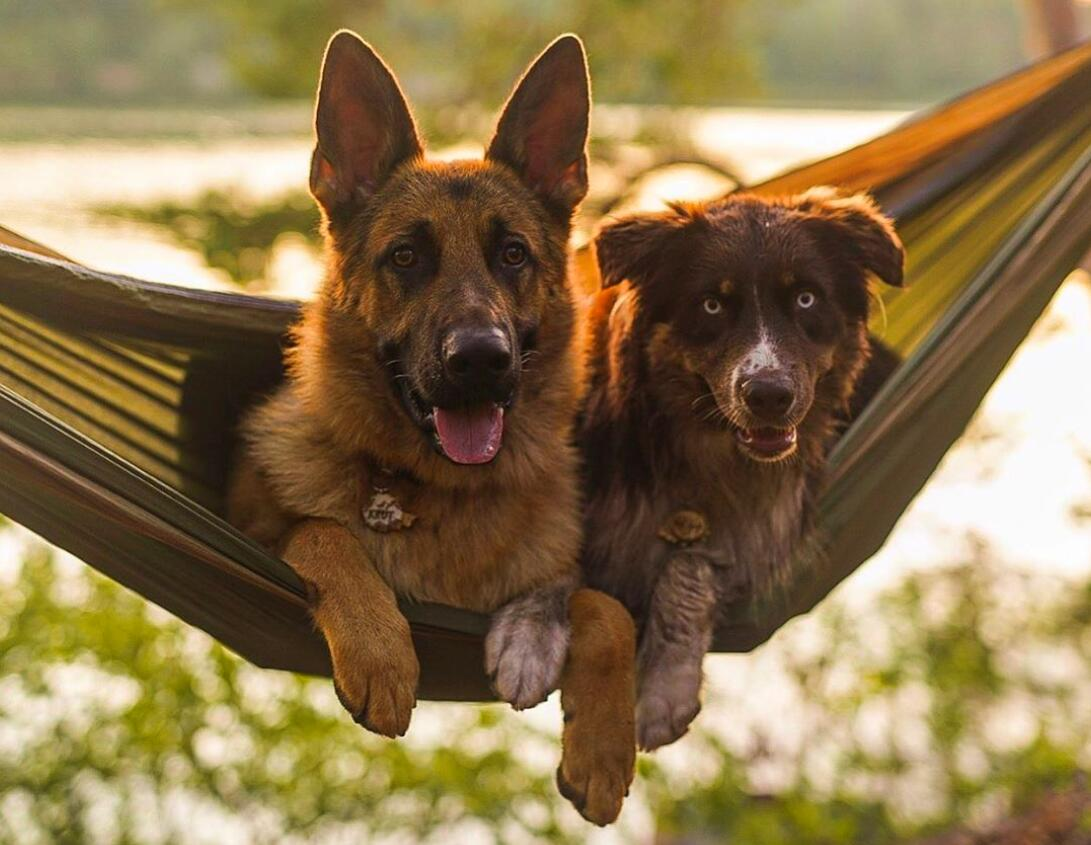 HAMMOCK CAMPING WITH A DOG