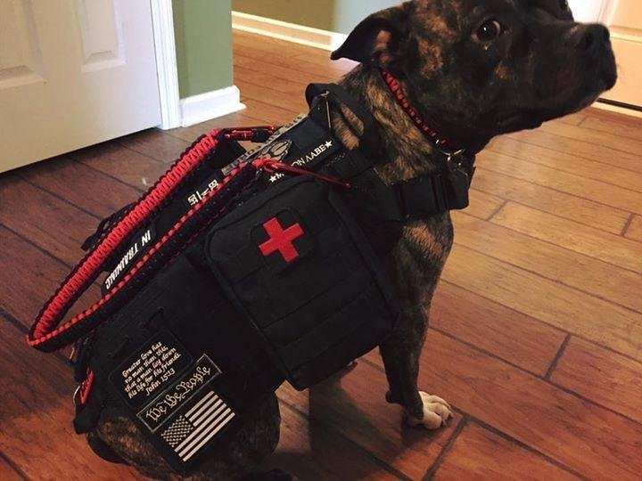 AT-HOME EMERGENCY KIT FOR YOUR PET