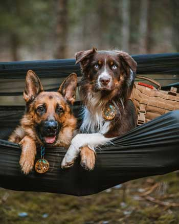 Camping with dog in OneTigris kompound Hammock in the wild