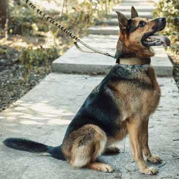 Dog Leash 110
